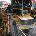May PX under 10mtr trawler scalloper. - picture 18