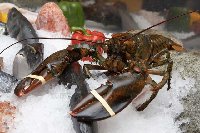 Lobster bands - picture 1