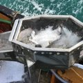 Boat refit service, Net Drums, Fish washer, kort Nozzle - picture 9